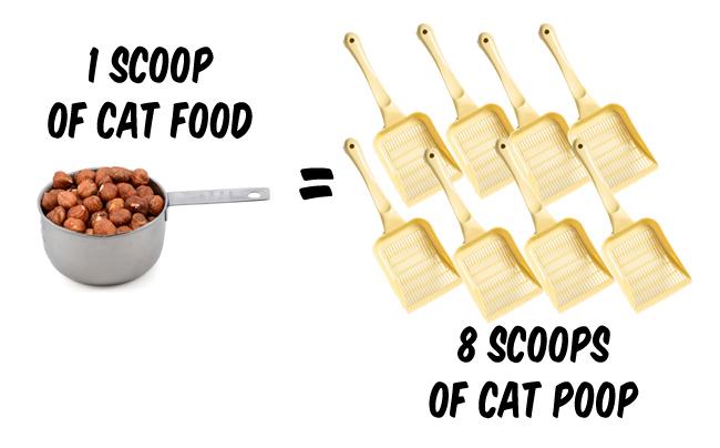 catfoodversuspoop