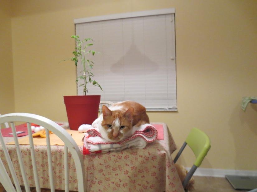 Top 10 Ways My Cat is anAsshole